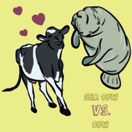 Seacow vs. Cow