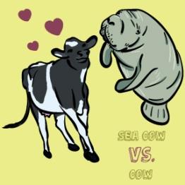 Seacow vs. Cow
